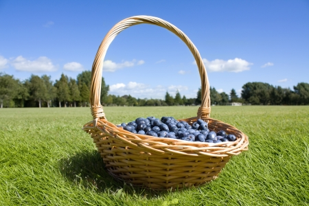 Blueberries in the basket outdoor photo