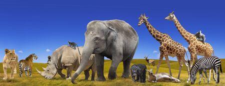 Wild animals collection panorama Stock Photo