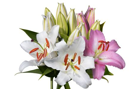 Pink and white lily flowers bouquet isolated on white Reklamní fotografie