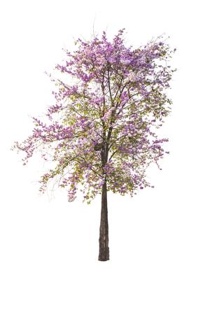 background: Beautiful tree on isolated white background. Stock Photo