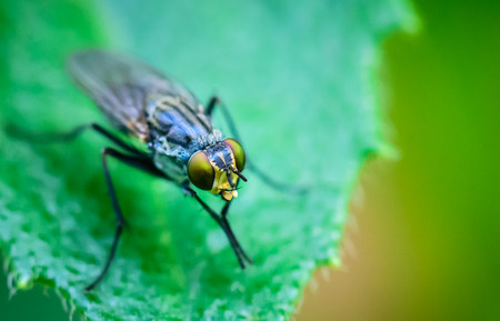 Macro insect portrait on green leaves and green nature background. Stock Photo