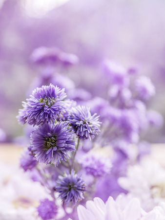 Flowers background,closeup beautiful purple flowers in nature background.