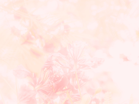Abstract beautiful pink flowers closeup pattern texture for nature background. Stock fotó