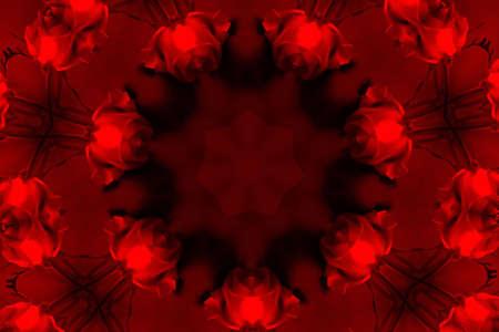 valentines red rose photo