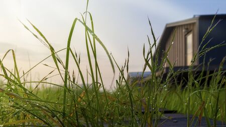 Country house in the sun. Dewdrops in the spotlight on the grass. Blurred background. Place for your text. lose-up