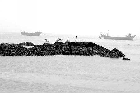 Sea and Seagulls  Stock Photo