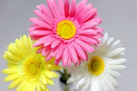 flower,Daisy Stock Photo