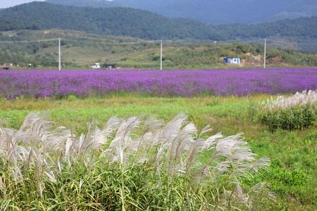 Flower of the grassland Stock Photo