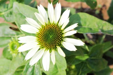 Fragrant, flowers