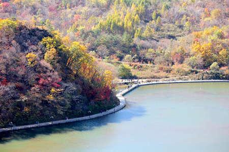 Autumn, the lake maple trees