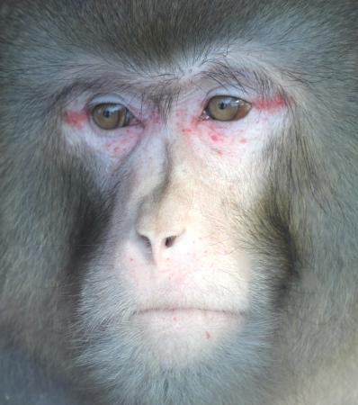 lactation: Monkey