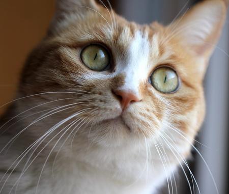 lactation: Cat