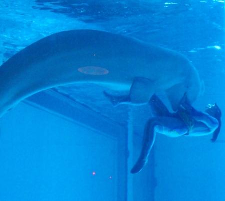 white whale Stock Photo - 21952586