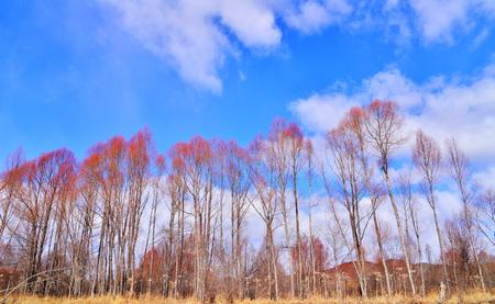 mangroves: Mangroves under the blue sky Stock Photo