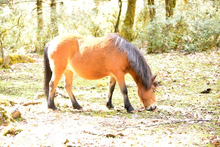 yunnan: Yunnan Horse