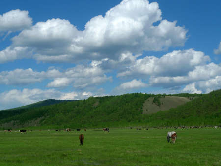prairie: Prairie scenery