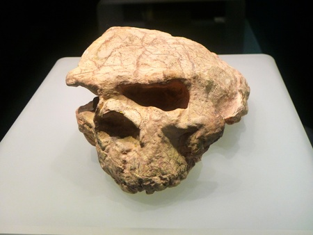 discovered: Of tooth enamel from yunxian first skull fossils were first discovered in Hubei Province, the best preserved ancient human skull fossils. Editorial