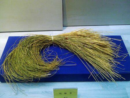 carex: Carex meyeriana grass