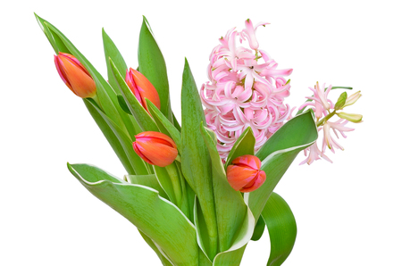 Tulips flowers and pink hyacinth isolated on white background Stock Photo