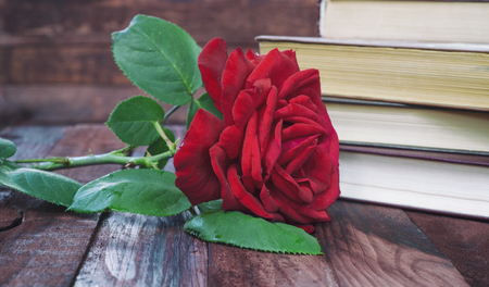 Red rose on a table on a background of the books, retro styling