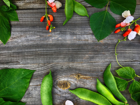 bean pod: Branch with bean pod, flowers and green leaves, a composition in the form of a frame, a top view Stock Photo