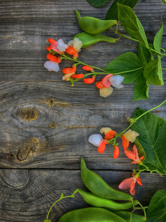 bean pod: Branch with bean pod, flowers and green leaves, a top view