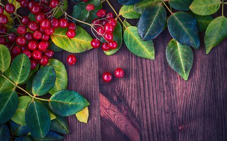 Wooden brown background with autumn leaves and bunches of Viburnum, top view,  empty space Stock Photo