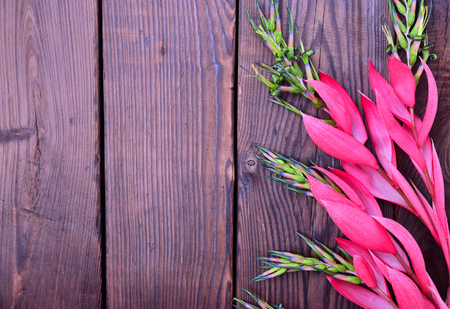 Pink flower of Billbergia on a brown wooden surface, empty space on the left Stock Photo