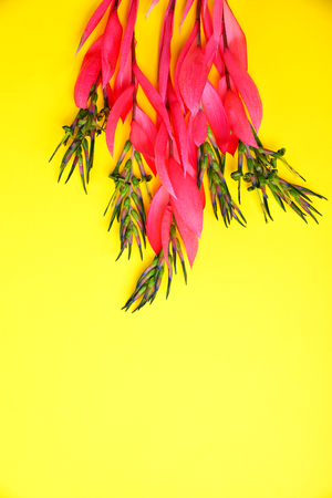 bouquet of pink billbergia on yellow surface, the empty space at the bottom Stock Photo