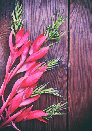 Pink flower of Billbergia on a brown wooden surface, vintage toning Stock Photo