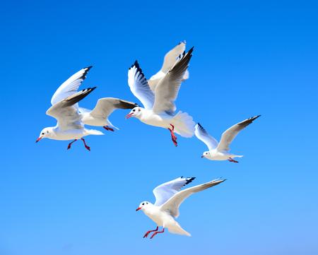kudde witte meeuwen zwevend in de lucht tegen een blauwe heldere hemel op een zomerse dag