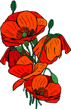 Hand-drawn bouquet of blooming red poppies with green stems and boxes, isolated on white background.