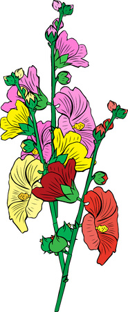 Bouquet of three flowers mallow yellow, red and pink with green stems isolated on white background.