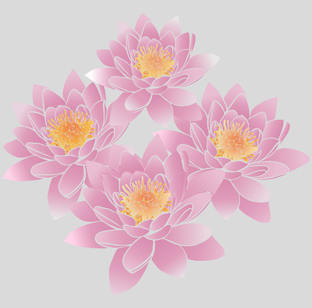 Bouquet of pink lily buds with yellow stamens on a gray background. Stock Vector - 98852681