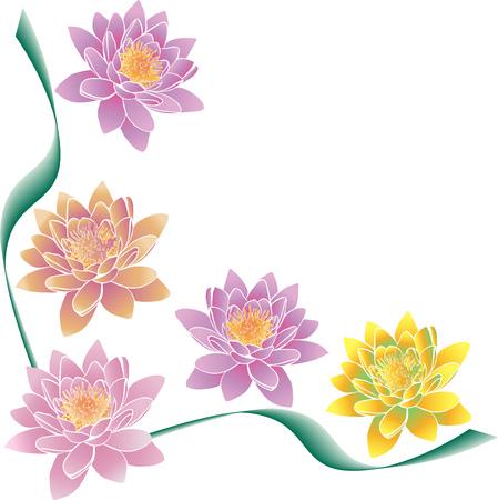 Fiori di loto multicolore e strisce verdi, motivo angolare isolato su sfondo bianco Archivio Fotografico - 98985544