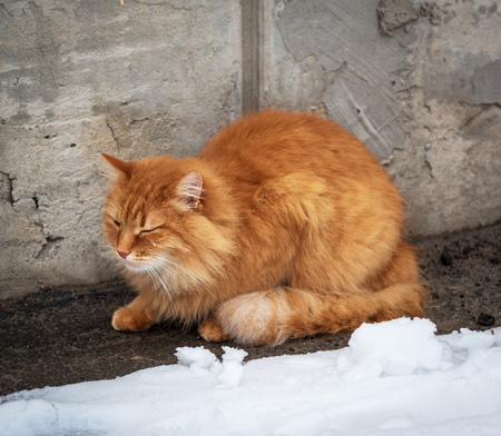 big red fluffy cat sits and freezes in the middle of the snow on the street