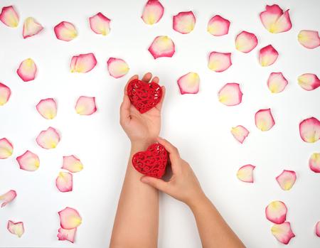 female hands hold red hearts, white background with pink rose petals, top view Stockfoto