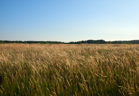 wild steppe on a summer day, Ukraine, Kherson region Stockfoto
