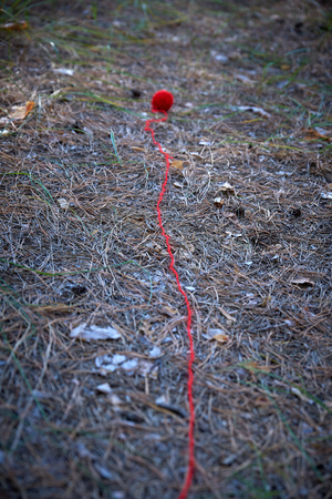small red wool ball unwound in the middle of the forest, the thread lies on the path