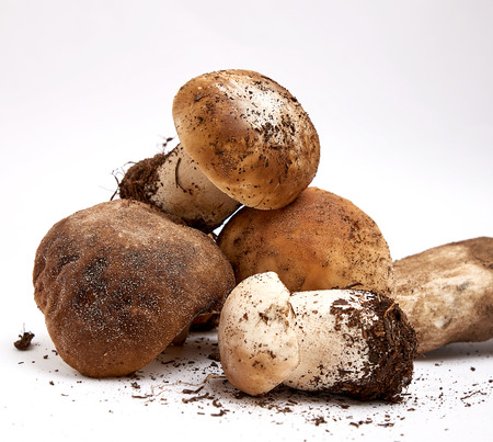 fresh raw mushrooms with roots on a white background, close up