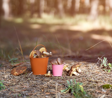 edible forest mushrooms in an orange iron bucket in the middle of the forest on an autumn afternoon Stockfoto