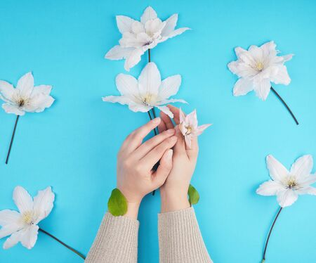 two female hands holding blooming white clematis buds on a blue background, fashionable concept for hand care, anti-aging care, spa treatments