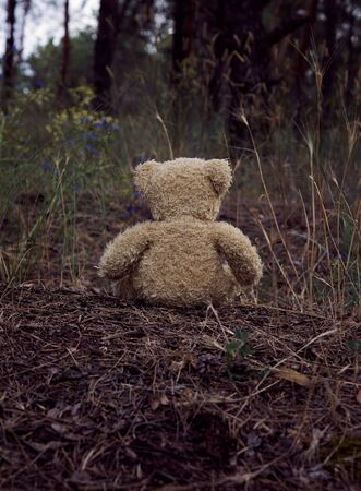 brown teddy bear sits back in the middle of a sandy road in the forest,  concept of loneliness and forgetting
