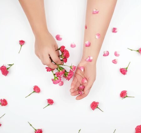 two female hands with smooth skin, white background with pink rosebuds, fashionable skin care concept 写真素材