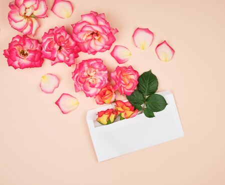 yellow rose buds and a white paper envelope on a peach background, top view, flat lay