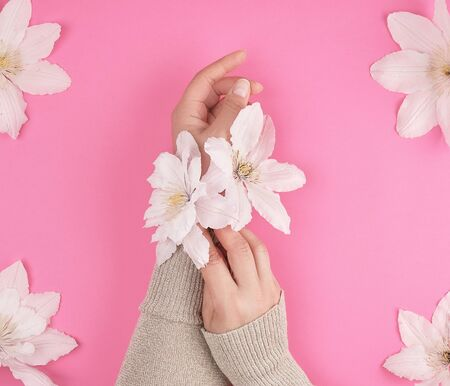 female hands and blooming white clematis buds on a pink background,  fashionable concept for hand skin care, anti-aging care, spa treatments Banco de Imagens
