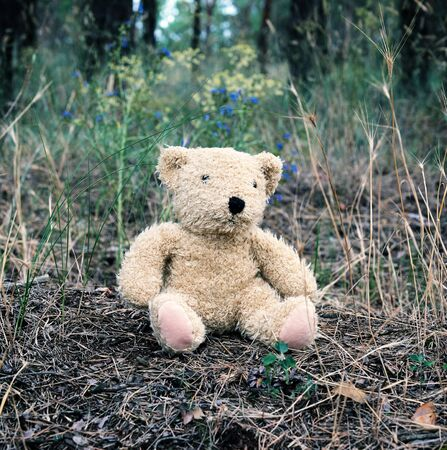 abandoned brown teddy bear sitting in the middle of the forest in the evening,  concept of loneliness Stock fotó