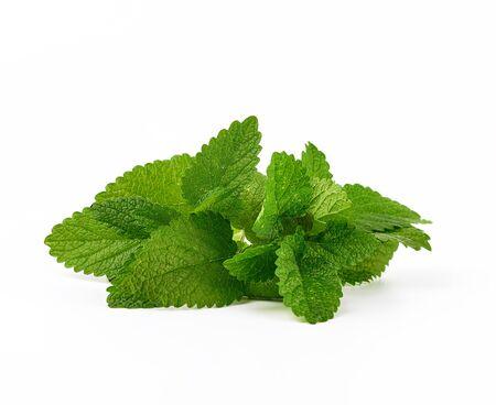 brin de menthe avec des feuilles vertes sur fond blanc, gros plan