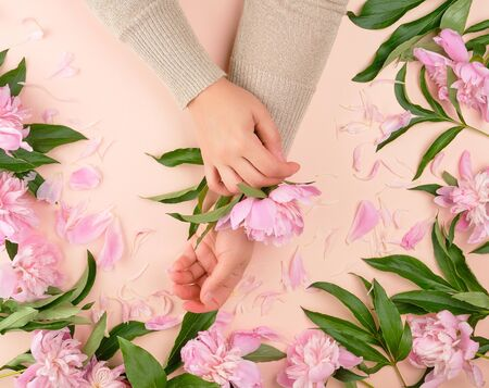 two female hands and pink blooming peonies on a beige background, fashionable concept for hand skin care, anti-aging care, spa treatments
