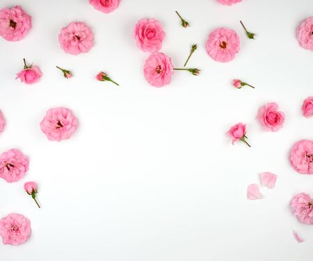 blooming buds of pink roses on a white background, top view, full frame, flat lay, copy space